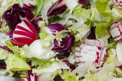 Mixed fresh salad Royalty Free Stock Images
