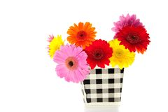 Colorful mixed gerber daisies Royalty Free Stock Photography