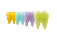 Colorful model teeth Royalty Free Stock Photos