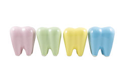 Colorful model teeth Royalty Free Stock Photo
