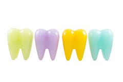Colorful model teeth Stock Image