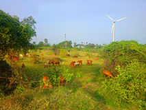 Colorful modern rustic idyll pastoral in India Wind farm Stock Photography