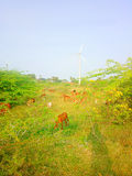 Colorful modern rustic idyll pastoral in India Wind farm Stock Image