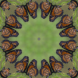 Colorful Monarch Butterfly Kaleidoscope 2 Stock Image