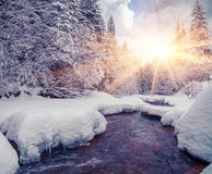 Colorful morning with dark river in the winter mountain forest. Royalty Free Stock Photo