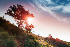 Colorful morning landscape Royalty Free Stock Images