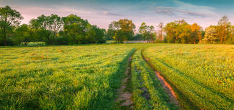 Colorful morning panorama of spring meadow Royalty Free Stock Image