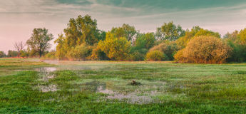 Colorful morning panorama of spring meadow Royalty Free Stock Photo