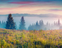 Colorful morning scene in the Carpathians. Royalty Free Stock Photography