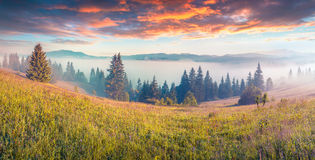 Colorful morning scene in the mountains Stock Image