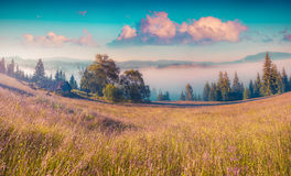 Colorful morning scene in the mountains Royalty Free Stock Photography
