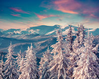 Colorful morning scene in the winter mountain. Instagram toning Royalty Free Stock Photos