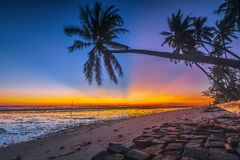 Colorful morning under the coconut tree stock photos