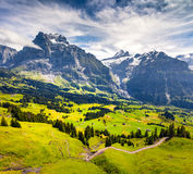 Colorful morning view of Grindelwald village valley from cablewa Royalty Free Stock Image