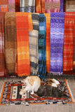 Colorful Moroccan Cats and Scarves. Colorful cats relaxing on a colorful ornate carpet in front of colorful scarves, both with a variety of patterns displayed on Royalty Free Stock Photos