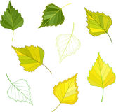 Colorful mosaic birch leaves. . easy to modify. Vector illustration Stock Image