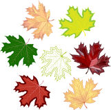 Colorful mosaic maple leaves. . easy to modify. Vector illustration Stock Photography