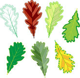 Colorful mosaic oak leaves. . easy to modify. Vector illustration Stock Image