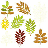Colorful mosaic rowan leaves. isolated. easy to modify. Vector illustration Stock Photos