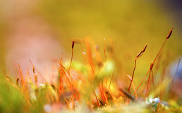Colorful moss Royalty Free Stock Photos