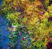 Colorful mossy background Royalty Free Stock Photos