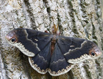 Colorful Moth Stock Images