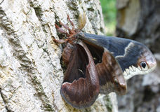 Colorful Moth Royalty Free Stock Images