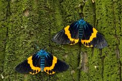 Colorful moth Royalty Free Stock Photo