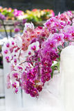 Colorful moth orchids decoration stock photography