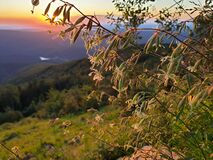 Free Colorful Mountain Flowers At Sunset In Semenic Mountains, Romania Royalty Free Stock Image - 193249786