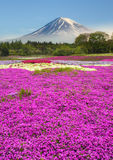 Colorful of mountain Fuji with flower field Stock Images