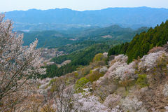 Colorful mountain landscape and blossoming cherry trees in spring at Mount Yoshino in Nara Royalty Free Stock Photography