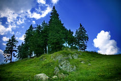 Colorful mountain landscape - fir trees and sky Royalty Free Stock Photos