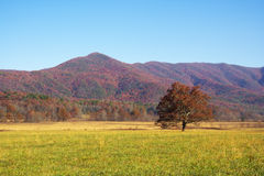Colorful mountain landscapes in fall stock photo