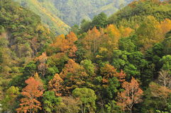 Colorful mountain (Taiwan scenery) . Royalty Free Stock Photo