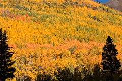 Colorful Mountainside in Fall Stock Images
