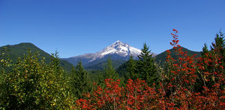 Colorful Mt Hood Royalty Free Stock Photography