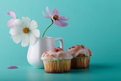 Colorful muffin with flower. Aqua color background Royalty Free Stock Image