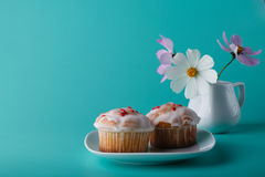 Colorful muffin on saucer with flower. Aqua color background Stock Image
