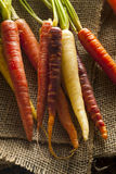 Colorful Multi Colored Raw Carrots. On a Background Stock Images
