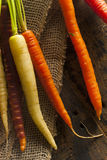 Colorful Multi Colored Raw Carrots Royalty Free Stock Photo