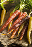 Colorful Multi Colored Raw Carrots Stock Photography