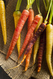 Colorful Multi Colored Raw Carrots. On a Background Stock Image