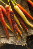 Colorful Multi Colored Raw Carrots. On a Background Royalty Free Stock Images