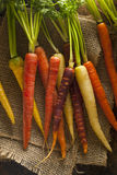 Colorful Multi Colored Raw Carrots. On a Background Royalty Free Stock Photography
