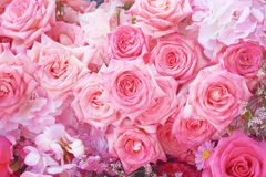 Colorful multicolored ornamental of beautiful pink roses blooming patterns group texture on wall for background stock images