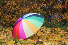 Colorful multicolored umbrella on yellow autumn leaves.  Royalty Free Stock Photography