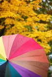 Colorful multicolored umbrella on yellow autumn leaves Royalty Free Stock Image