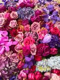 Colorful and multiple kinds of flower royalty free stock photos