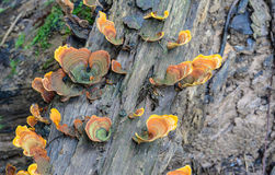 Colorful mushrooms grow in forest Stock Photo